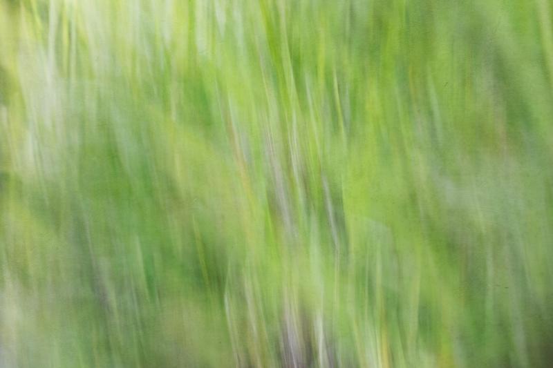 Flowing Grass