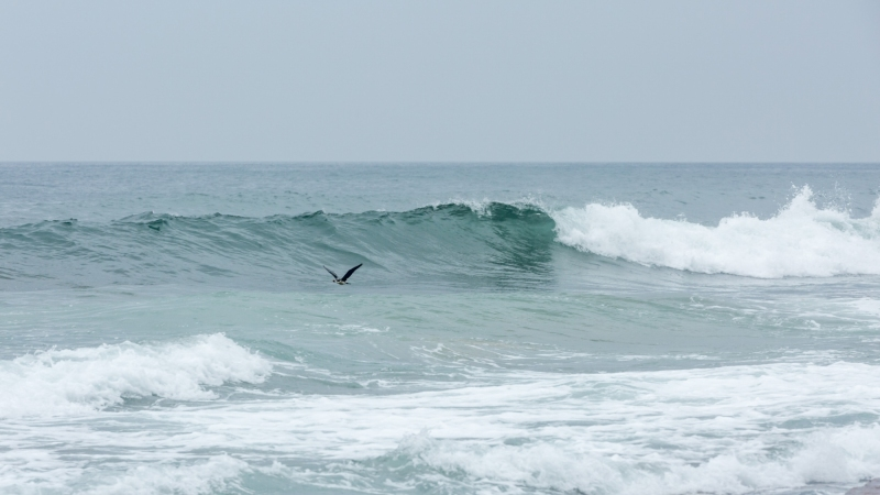 Coledale Beach, NSW
